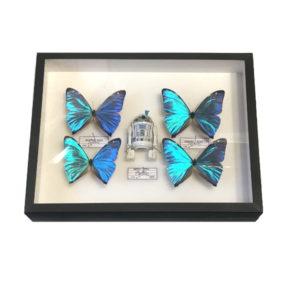 pocket-factory-benjamin-pietri-R2D2-4-papillons-butterfly