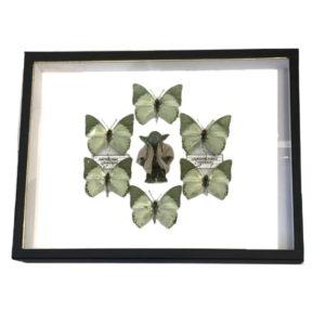 pocket-factory-benjamin-pietri-yoda-6-papillons-verts-